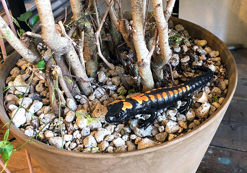 REPTILES MAG BARRED TIGER SALAMANDER(レプタイルズ マグ バード タイガー サラマンダー)のイメージ写真01