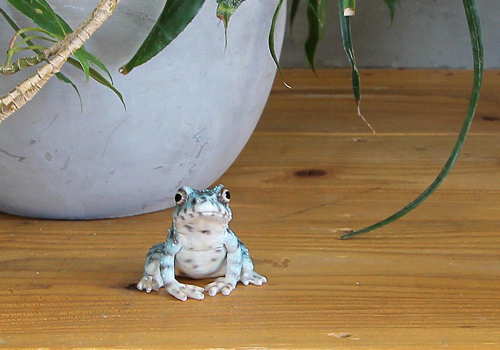 REPTILES MAG ISHIKAWA'S FROG(レプタイルズ マグ イシカワガエル)のイメージ写真02