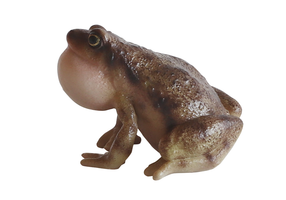 REPTILES MAG OMATE NARROW MONTHED FROG(レプタイルズ マグ ヒメアマガエル)のイメージ写真05