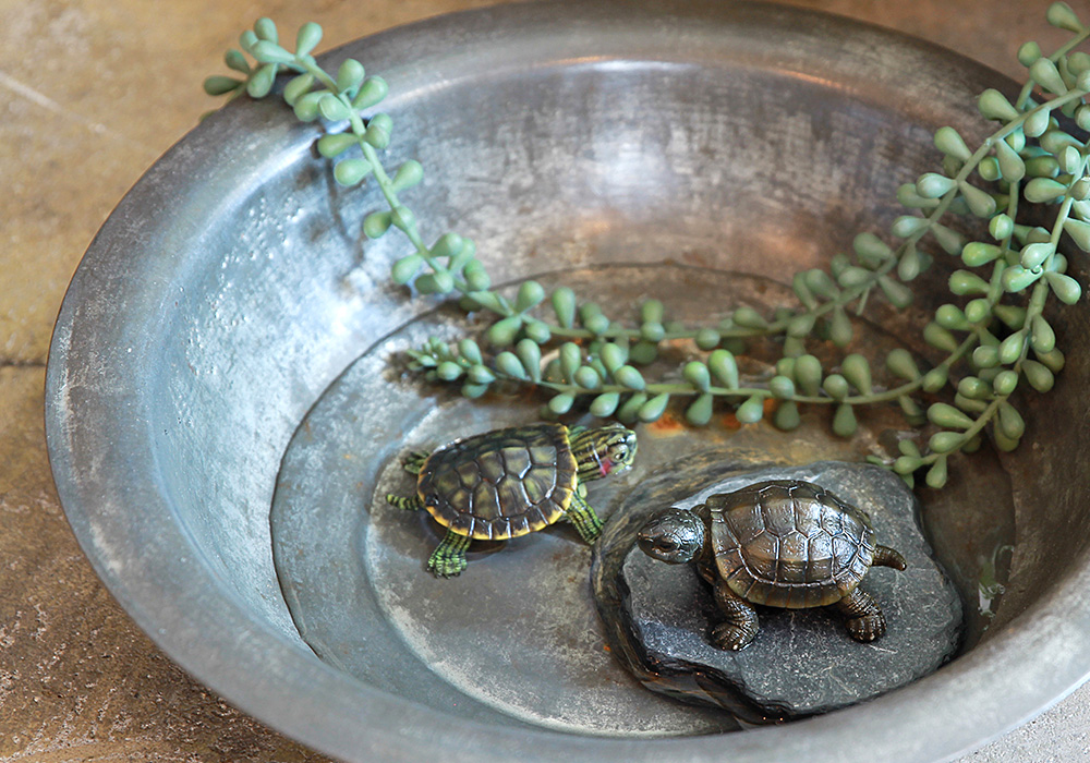 REPTILES MAG POND TURTLE(レプタイルズ マグ ポンド トータス)のイメージ写真01