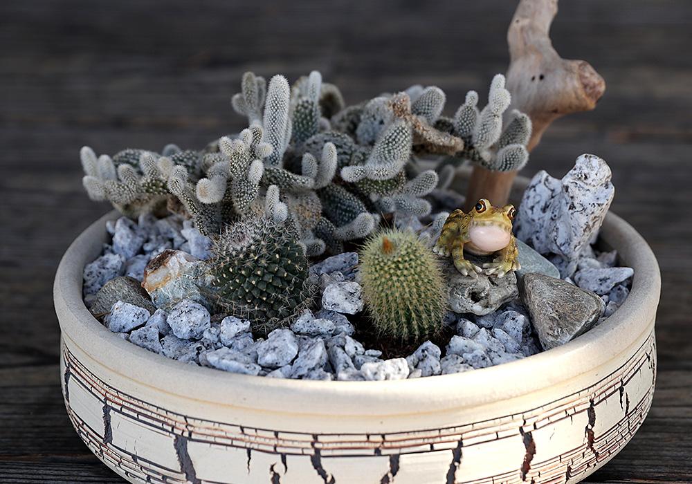 REPTILES MAG RYUKYU KAJIKA FROG BLOW BUBBLES(レプタイルズ マグ リュウキュウカジカガエル)のイメージ写真04