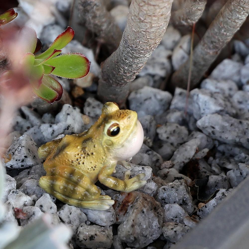RYUKYU KAJIKA FROG BLOW BUBBLES
