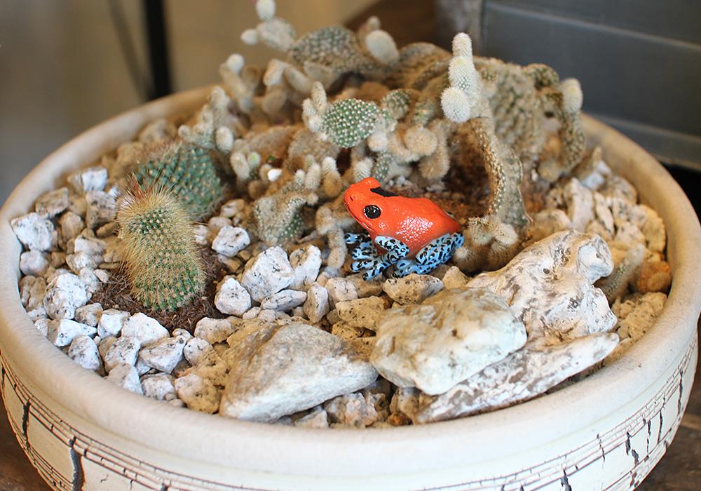 REPTILES MAG STRAWBERRY POISON DART FROG(レプタイルズ マグ ストロベリー ポイズンダートフロッグ)のイメージ写真02